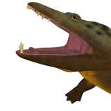 Mastodonsaurus Amphibian Head. Mastodonsaurus was an aquatic amphibian animal that lived in Europe during the Triassic Period royalty free illustration