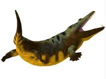 Mastodonsaurus Amphibian Tail. Mastodonsaurus was an aquatic carnivorous amphibian that lived in Europe during the Triassic Period stock illustration