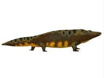 Mastodonsaurus Side Profile Royalty Free Stock Photography