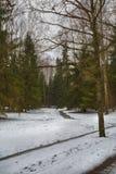 Mastpijnbomen en hoge berken in de sombere winter, snow-covered park, kunstverwerking royalty-vrije stock foto