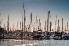 Mastros aglomerados no porto de Roberts do ponto fotografia de stock royalty free