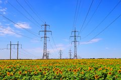 Free Masts Of A High Voltage Power Line Against The Background Of A Field With Sunflower. Steel Supports And Wires. Power Stock Photos - 155047973