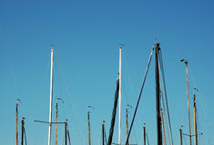 Masts of sailboats against blue sky. Multiple masts of sailboats in a harbour against sunny blue sky Stock Image