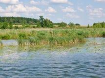 Masurian See mit Schilfen shore-1 Lizenzfreies Stockbild