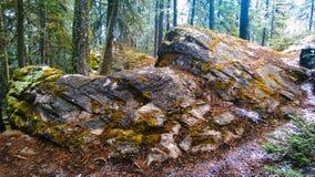 Masywna skała w halnym lesie Zdjęcie Royalty Free