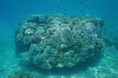 Masywnego koralowego pinakla podwodny Pacyficzny ocean Obraz Royalty Free