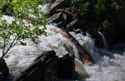 Masywny drzewny bagażnik blokuje Potomac rzekę - 2 zdjęcie stock