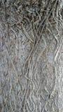 Masywny drzewo Obraz Stock