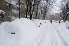 Masywny opad śniegu w neighbourhood Obraz Royalty Free