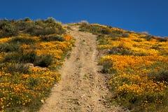 MASZERUJE 15, 2019 Super kwiatu Kalifornia maczk?w w piechura jarze na zewn?trz Jeziornego Elsinore, brzeg rzeki - jezioro ELSINO obraz royalty free