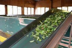 Maszyneria w herbacianej fabryce Rambukkana Sri Lanka obrazy stock