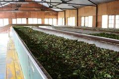 Maszyneria w herbacianej fabryce Rambukkana Sri Lanka fotografia royalty free