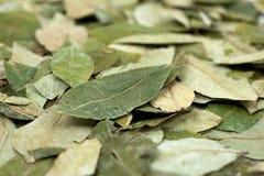 Matéria- prima da cocaína - folhas secadas da coca Fotos de Stock Royalty Free