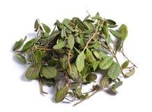 Matérias primas medicinais secadas das ervas isoladas no branco folhas de Fotografia de Stock Royalty Free