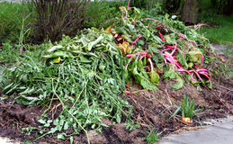 Matériau organique de compost Image libre de droits