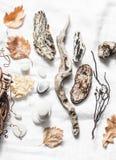 Matériaux naturels pour la créativité sur un fond clair photos stock