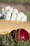 Matériel de cricket. Images libres de droits
