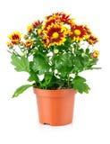 Matériel de jardin avec les plantes vertes Photo libre de droits
