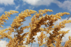 Mat-grass Royalty Free Stock Images