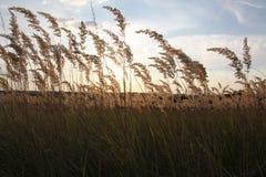 Mat-grass. Gold mat-grass on beauty spot place of the field Royalty Free Stock Photos