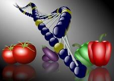 mat som ändras genetiskt Royaltyfri Bild