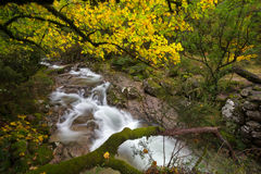 Mata DA Albergaria ποταμός σε Geres Στοκ εικόνες με δικαίωμα ελεύθερης χρήσης