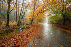 Mata da Albergaria, осень, Geres Стоковые Фотографии RF