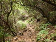 Mata da Albergaria, ein gut erhalten Eichenwald innerhalb Nationalparks Peneda-Gerês, Nord-Portugal stockfotografie