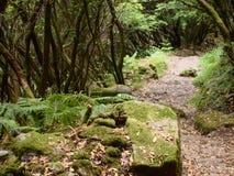 Mata da Albergaria, ein gut erhalten Eichenwald innerhalb Nationalparks Peneda-Gerês, Nord-Portugal lizenzfreies stockbild