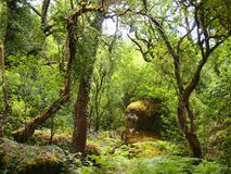 Mata da Albergaria, ein gut erhalten Eichenwald innerhalb Nationalparks Peneda-Gerês, Nord-Portugal stockbilder