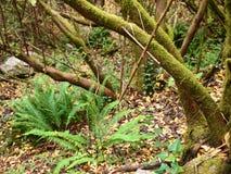 Mata da Albergaria, ein gut erhalten Eichenwald innerhalb Nationalparks Peneda-Gerês, Nord-Portugal stockfotos