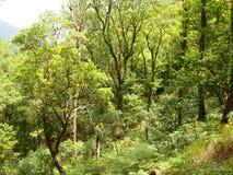 Mata da Albergaria, en väl bevarad ekskog inom den Peneda-Gerês nationalparken, nordliga Portugal Arkivbild