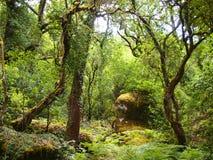 Mata da Albergaria, en väl bevarad ekskog inom den Peneda-Gerês nationalparken, nordliga Portugal Arkivbilder