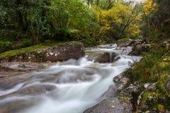 Mata da Albergaria rzeka w Geres Fotografia Stock