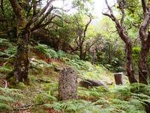 Mata da Albergaria, una foresta ben conservato della quercia all'interno del parco nazionale di Peneda-Gerês, Portogallo del Nor Immagini Stock Libere da Diritti