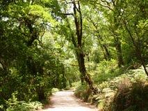 Mata da Albergaria, una foresta ben conservato della quercia all'interno del parco nazionale di Peneda-Gerês, Portogallo del Nor Fotografia Stock Libera da Diritti