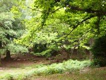 Mata da Albergaria, una foresta ben conservato della quercia all'interno del parco nazionale di Peneda-Gerês, Portogallo del Nor Fotografie Stock