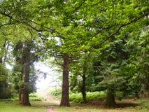 Mata da Albergaria, una foresta ben conservato della quercia all'interno del parco nazionale di Peneda-Gerês, Portogallo del Nor Immagine Stock
