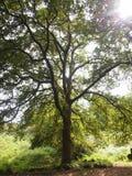 Mata da Albergaria, une forêt bien conservée de chêne dans le parc national de Peneda-Gerês, Portugal du nord Image stock