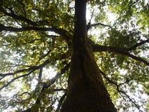 Mata da Albergaria, une forêt bien conservée de chêne dans le parc national de Peneda-Gerês, Portugal du nord Images stock