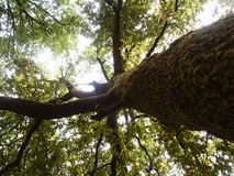 Mata da Albergaria, une forêt bien conservée de chêne dans le parc national de Peneda-Gerês, Portugal du nord Photographie stock libre de droits