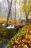 Mata da Albergaria w Geres parku narodowym, Portugalia zdjęcia stock