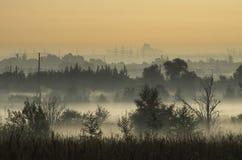 Mata de corte na névoa da manhã nos subúrbios da cidade Fotografia de Stock Royalty Free