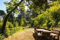 Mata de S Domingos de Benfica, Wald und Park in Lissabon, Portugal: der Picknickpark Stockfoto