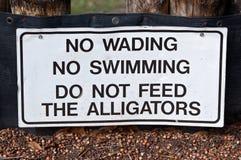Mata inte alligatorer Arkivfoto