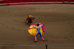 A Matador Luring a Bull. A colorful matador lures a charging bull in the arena of Angra do Heroísmo during the Sanjoaninas. This festival of St. John is the Royalty Free Stock Photos