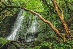 Matai在Catlins,新西兰的南岛下跌 库存图片