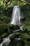 matai för 12 falls Royaltyfri Fotografi