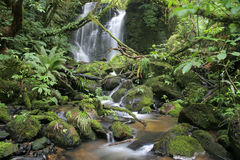 Matai falls Royalty Free Stock Photography