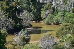 Matakana flodland Royaltyfri Bild